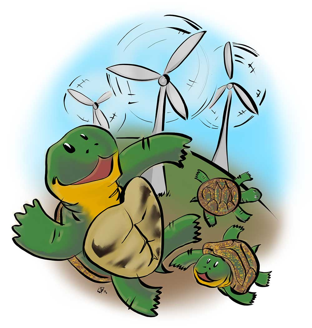 How the Blanding's turtle took on wind turbines in Prince Edward County cover